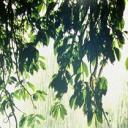 CLA Radio 11/7/14: Drought and Rain