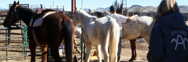 Horse Sense at the Arivaca Boys Ranch