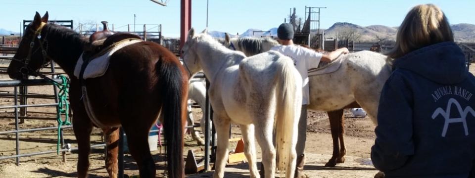 Horse Sense at the Arivaca Boys Ranch